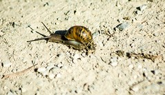 Snail and trail in sunlight
