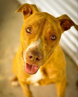 adoptable dog Derby