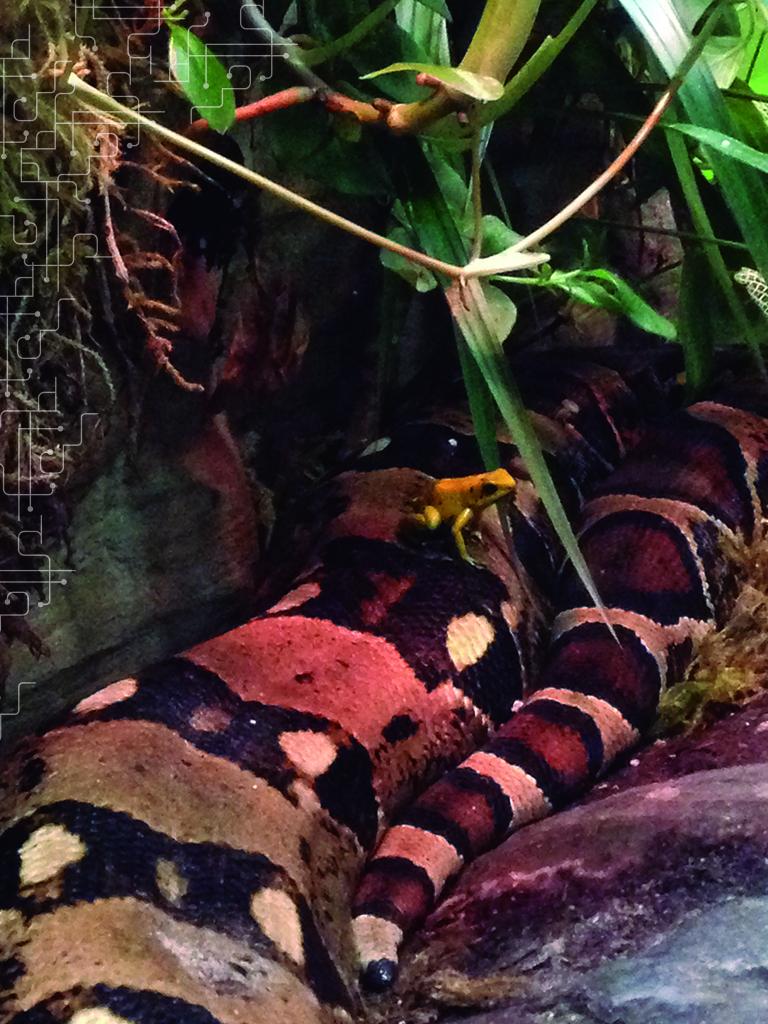 Cobra e sapos