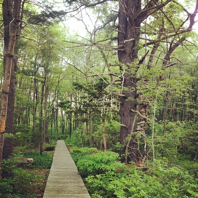 I Ventured Down The Path into the Unknown. #shirleyruns #newengland