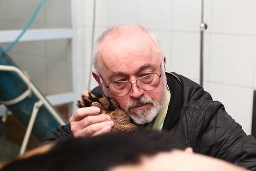 Peter Egan during the health check of Peter Bear, CBRC 2014