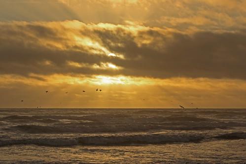 sunset beach pelicans nature birds breakers longbeachwashington
