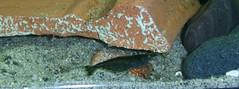 aquarium invertebrates