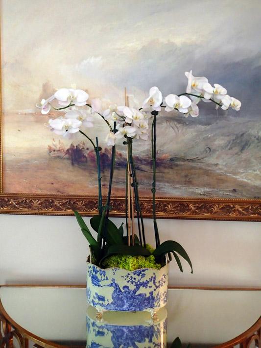 051314_orchids06