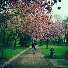 Where I bike