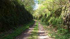 Sur l'ancienne ligne de Breuil-Barret à Velluire(4)