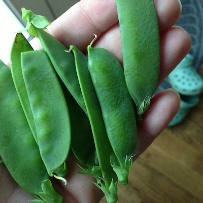 Homegrown Garden Peas