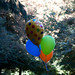 Small photo of Balloons in a park