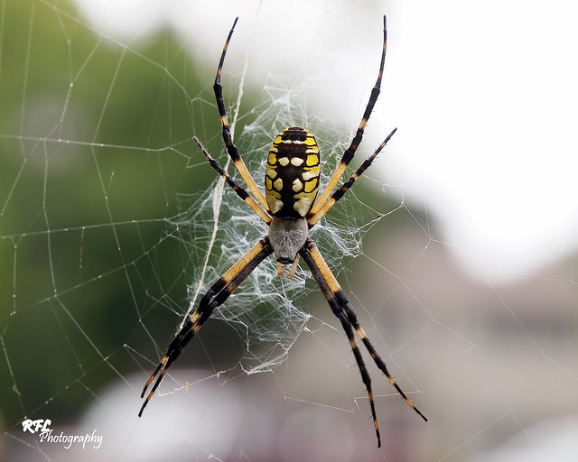 Writing Spider Images