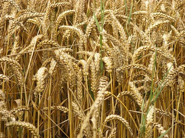 Pane ai Cereali con Farina di Manitoba Bimby