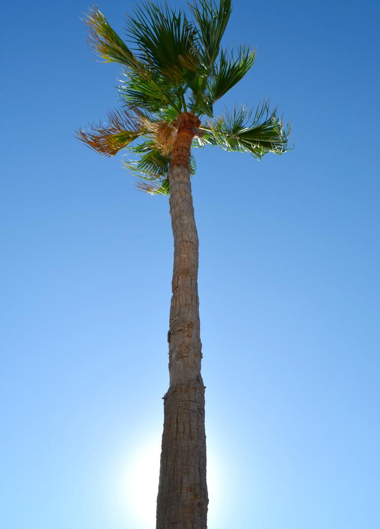 m131014 Tenerife pv 2 (17)