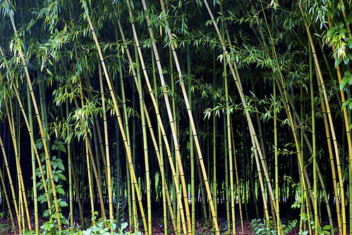 macro digital canon eos tamron 90mm tamronspaf90mmf28dimacro 大阪市立長居植物園