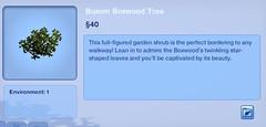 Buxom Boxwood Tree
