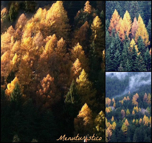 Collage autunno 3