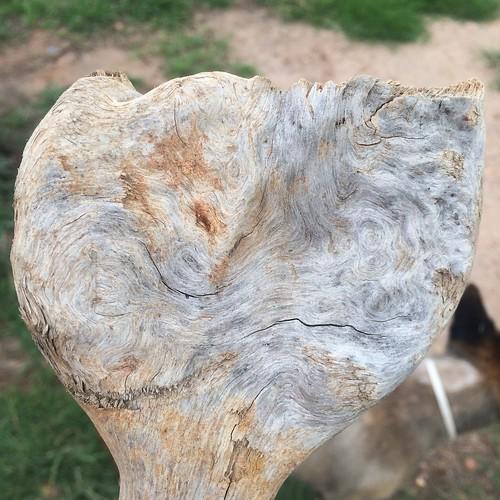 Random bit of wood that caught my eye!