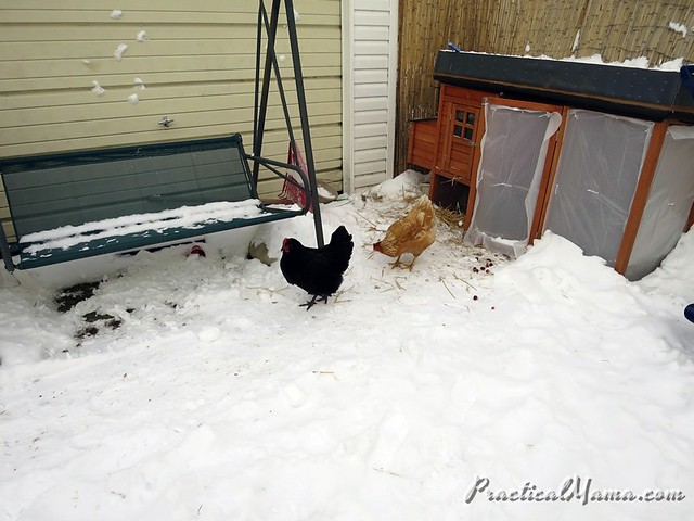Winterizing Coop