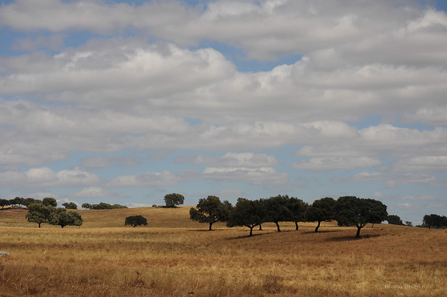Header of Alto Alentejo