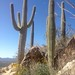 Tucson to Nogales
