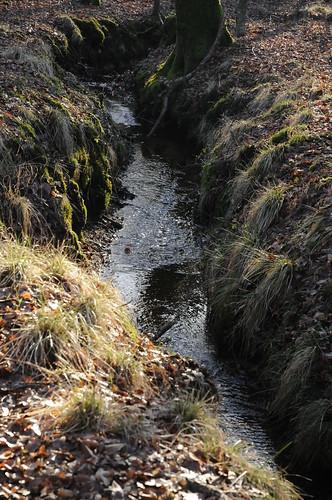 Bachlauf in den Staatsforsten in Ostenfeld, Nordfriesland (21)