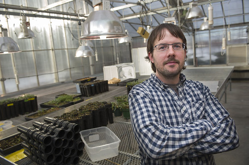 Research Entomologist Justin Runyon is a winner of this year's prestigious Presidential Early Career Award for Scientists and Engineers. He studies the chemical reaction between insects and plants for the Rocky Mountain Research Station. (Montana State University/Kelly Gorham)