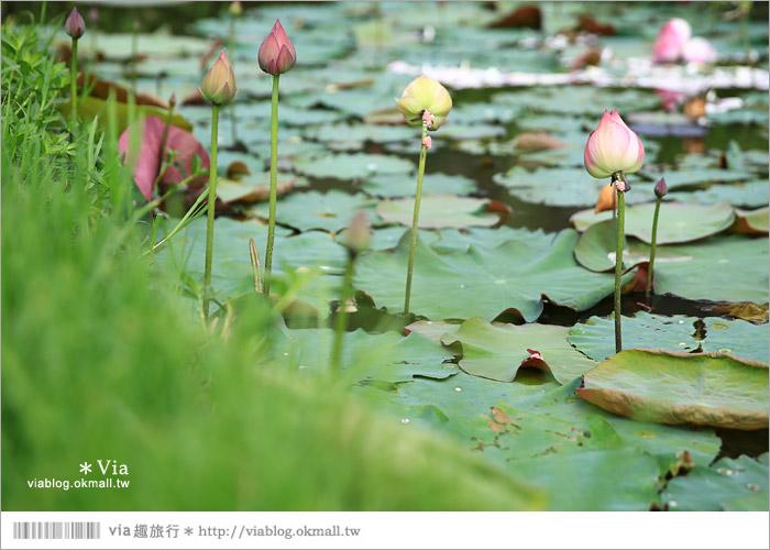 【彰化大村景點】大村雙心池塘/平和夕照平台@浪漫必遊‧約會拍照的好去處~14