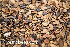 Maun, Botswana, Africa- Close up of pumpkin seeds