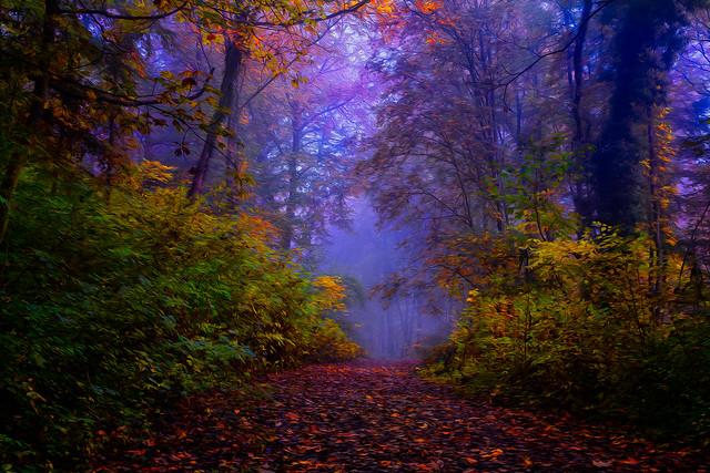 brume dans le bois