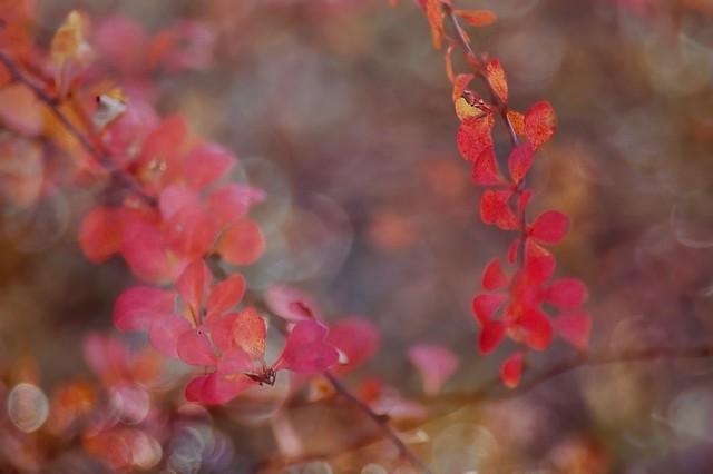 Fin d'automne1