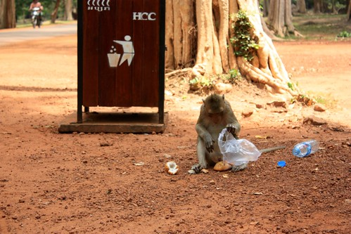 oops, Monkey dropped the snack