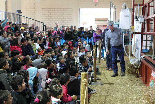 Dallas ISD students watch a milking demonstration at the Texas State Fair as part of a Farm to School Month field trip. (Photo credit: Dallas ISD)