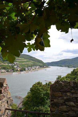 Rheingau Romantik Tour_castle vines overlooking Rhein