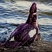 ♣The Duck along the pond ♣ by ♣Cleide@.♣