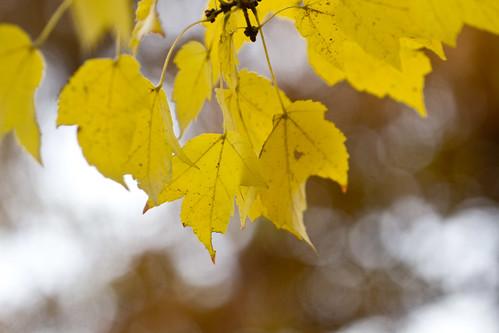 11-13 fall-9517-7