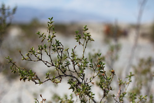 What grows in Death Valley?