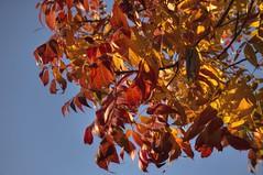 Intense autumn colors