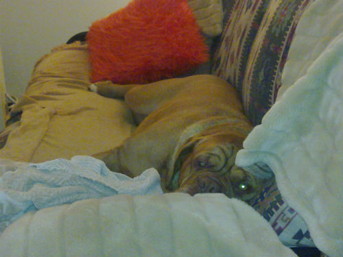 Cherie - do not disturb