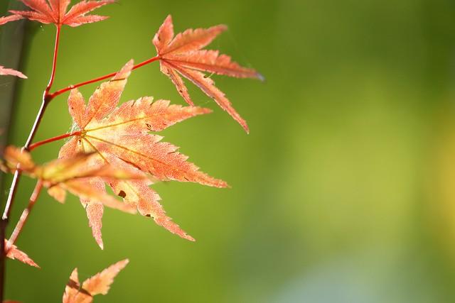 写真_「秋の気配2」