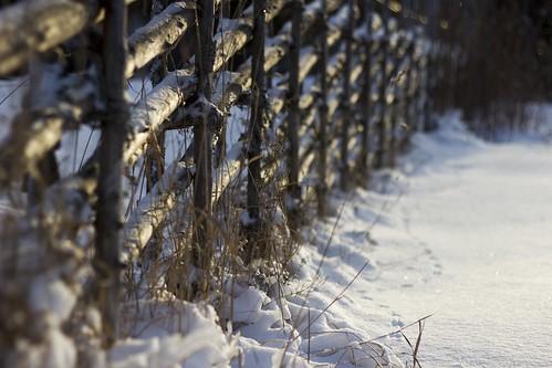 Första snön by EvasSvammel