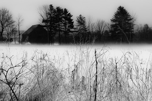 winter snow fog barn dark woods deep solstice lovely pinetum
