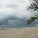 South Beach palm tree