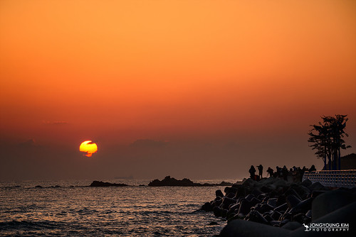 morning winter sea sun seascape tree silhouette sunrise asia photographer earlymorning korea southkorea morningtwilight