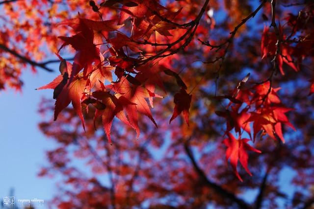 Panasonic_GX7_Kyoto_02