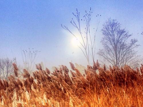 Sun Shining Through A Winter Gale