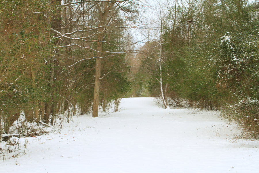 snow_day003