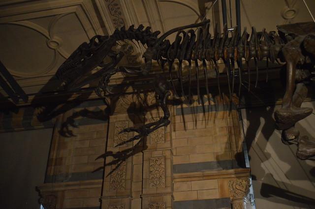 Allosaurus Up Above