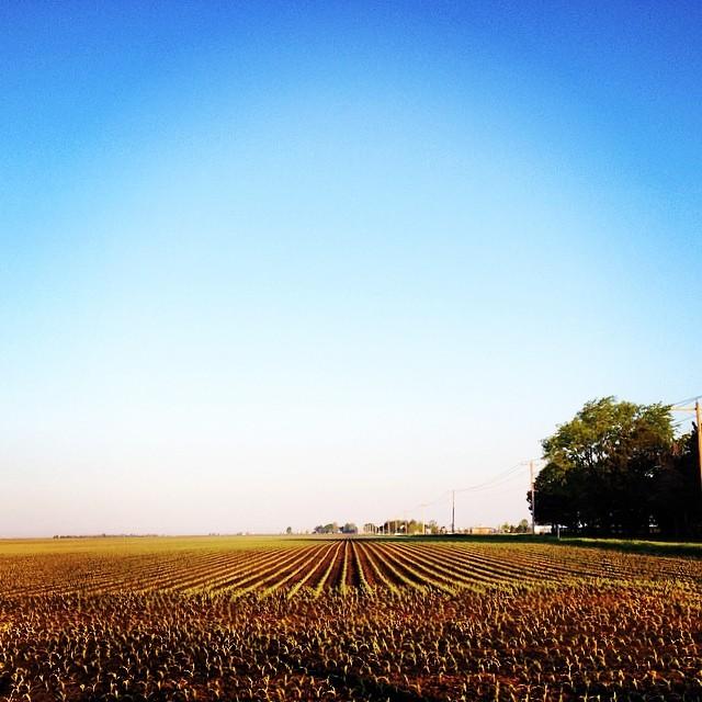 Potential #shirleyruns #prairie #farming #seenonmyrun