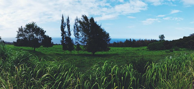 A field we passed by between Hilo and Kona.