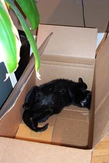 Sprawled in a moving box
