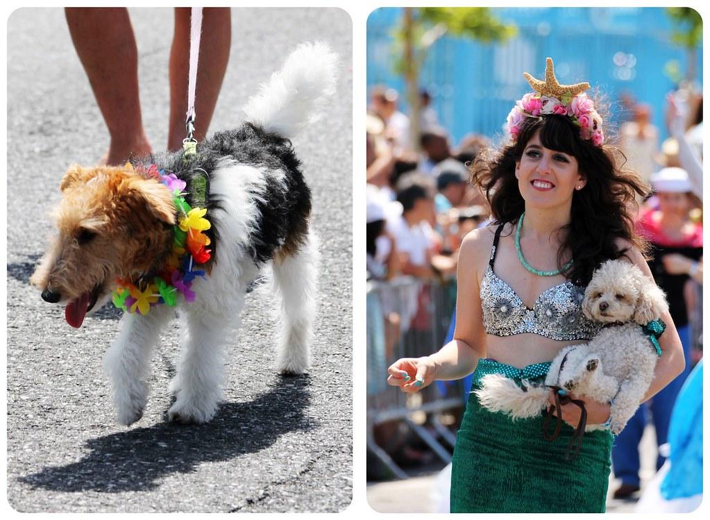 coney island mermaid parade dogs