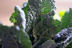 Lacinato Kale - Week 4 | The CSA Box Project
